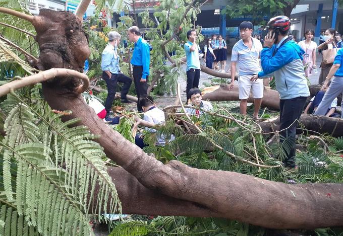 TP Hồ Chí Minh thông tin chính thức vụ tại nạn đổ cây làm 18 học sinh thương vong