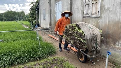 Bà Rịa-Vũng Tàu: Nhiều diện tích hẹ ở làng rau Kim Dinh phải cắt bỏ